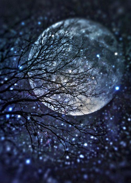 树丫月亮.jpg