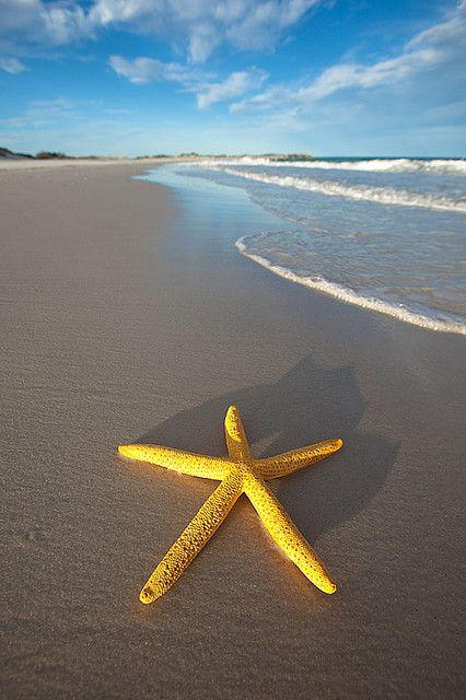 海边大星星.jpg
