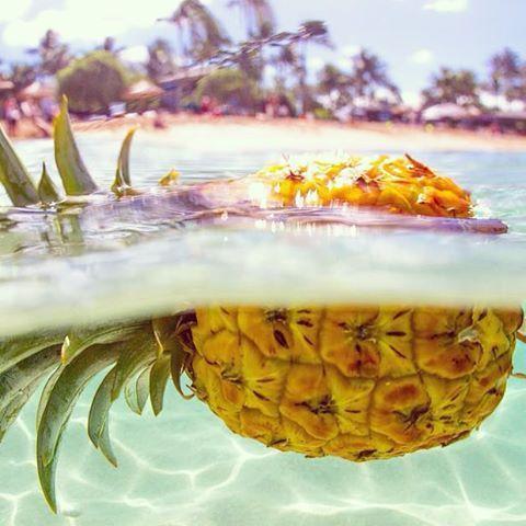海菠萝.jpg