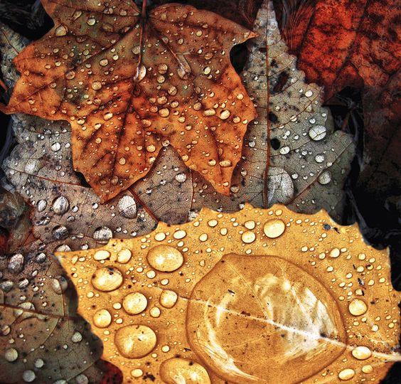 秋雨.jpg