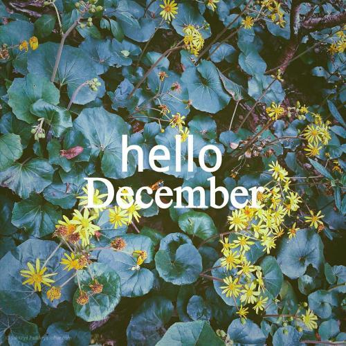 hello Dec.jpg